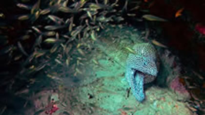 Bazaruto National Park: Diving on the 2 Mile Reef